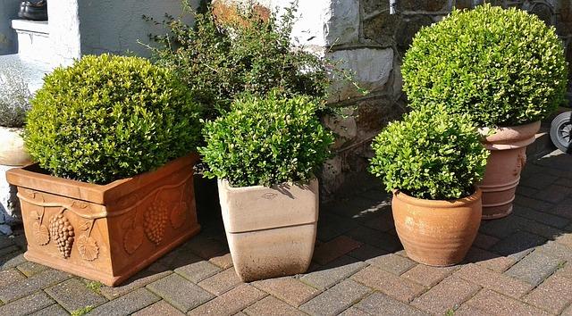 Bild Kübel bepflanzen