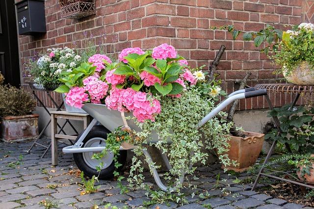 Bild Schubkarre bepflanzt
