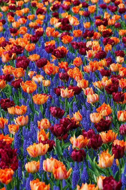 Blumen richtig düngen