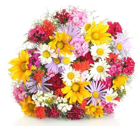Tipps Für Schnittblumen Aus Dem Eigenen Garten - Gartenmagazine.de Schnittblumen Frische Strause Garten