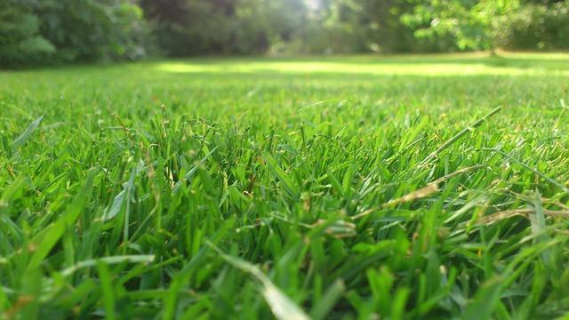 Unsere Tipps zum richtigen Rasenmähen
