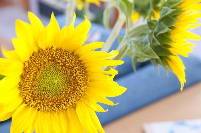 Sonnenblumen zum Valentinstag