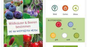 Wildkräuter und Beeren App