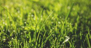Bild Rasen