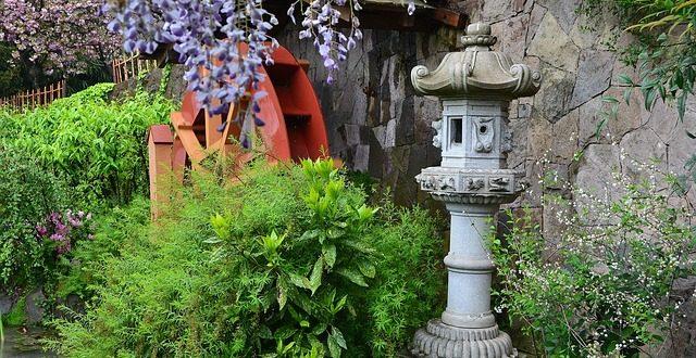 Japanische pflanzen asiatisches flair f r deinen garten for Japanischer garten pflanzen
