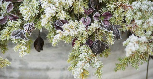 unser gartenkalender für januar - gartenmagazine.de, Terrassen ideen