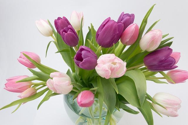Tulpen als Schnittpflanze
