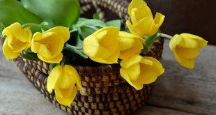 Bild Tulpen im Korb