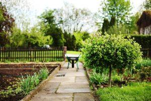 Bild Planung des Gartens