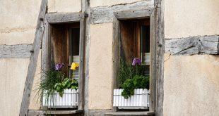 Bild Kräuter auf der Fensterbank