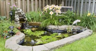 Bild Gartenteich