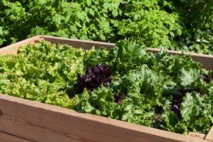 So Funktioniert Ein Hochbeet Anlegen Bepflanzen Pflegen