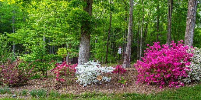 Bild Blumen unter Bäume pflanzen