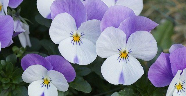 Blumen Fur Den Schattengarten Gartenmagazine De