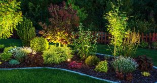 Bild Garten
