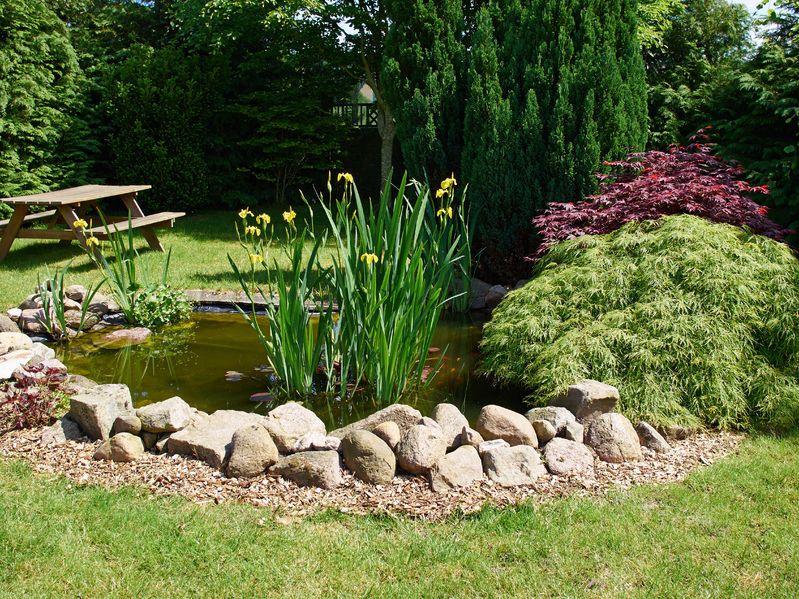 Bild Garten mit Gartenteich