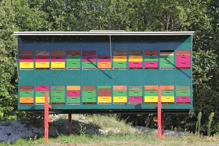 Haus für ein Bienenvolk