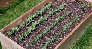 Hochbeete richtig befüllen und bepflanzen