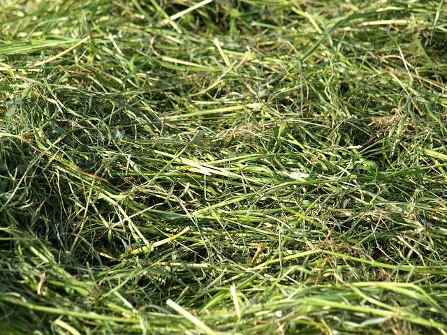 Mulchen des Rasens