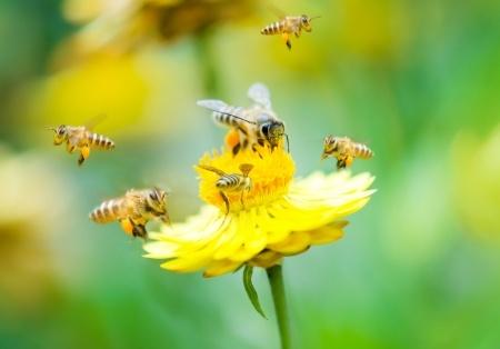 blühende Pflanzen für Bienen