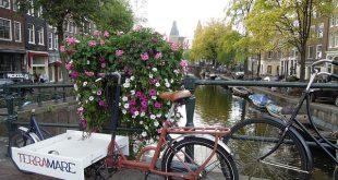 Bild Urban Gardening
