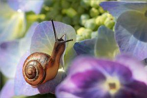 Bildnachweis Oldiefan / CC0 Public Domain-Pixabay.com