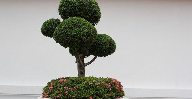 Bild kleiner Baum