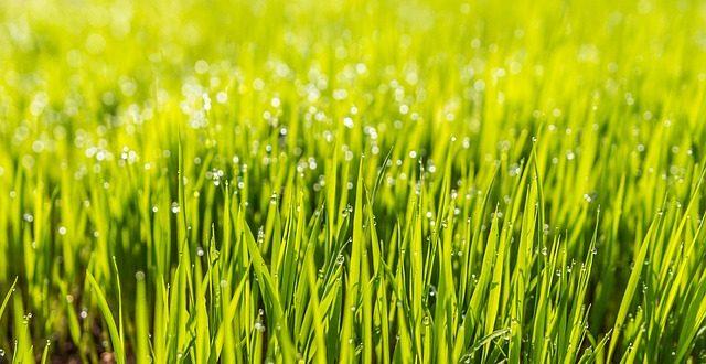 Mit Natürlichem Dünger Zu Einem Schönen Rasen Gartenmagazinede