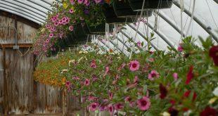 Bild Pflanzen im Gewächshaus