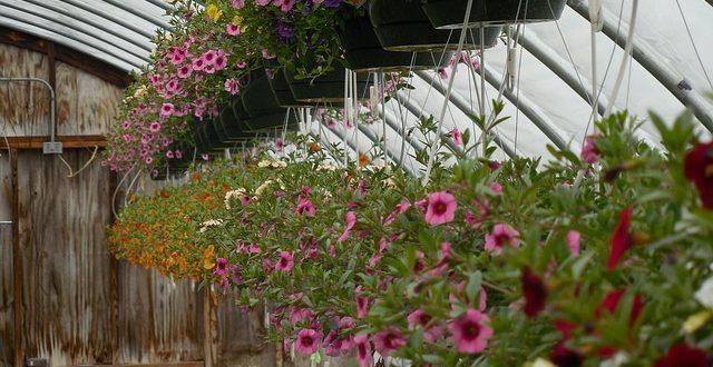 Optimales Klima Fur Pflanzen Im Gewachshaus Gartenmagazine De