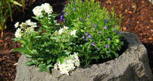 Bild Blumen im Kübel