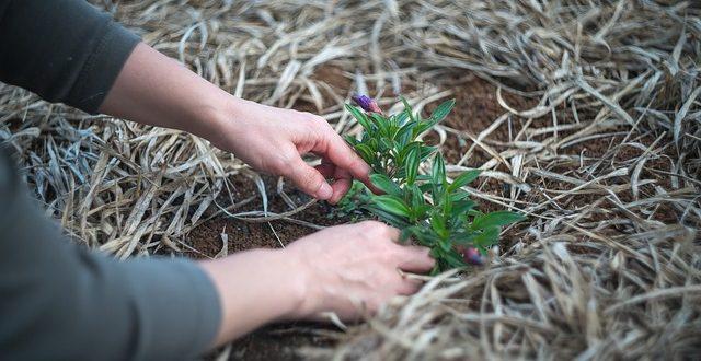 Bild Gartenarbeit