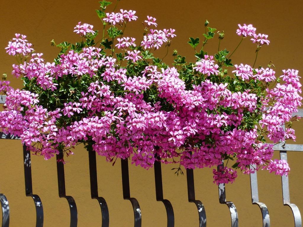 Balkon für den Frühling vorbereiten