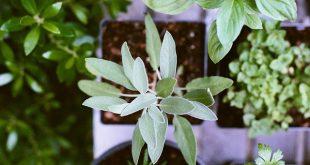 Bild Zimmerpflanzen