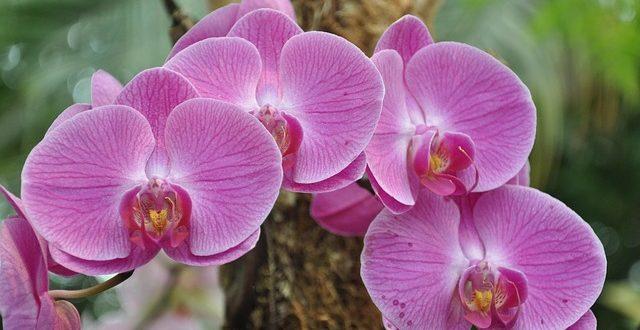 orchideen von der zucht bis zur pflege. Black Bedroom Furniture Sets. Home Design Ideas