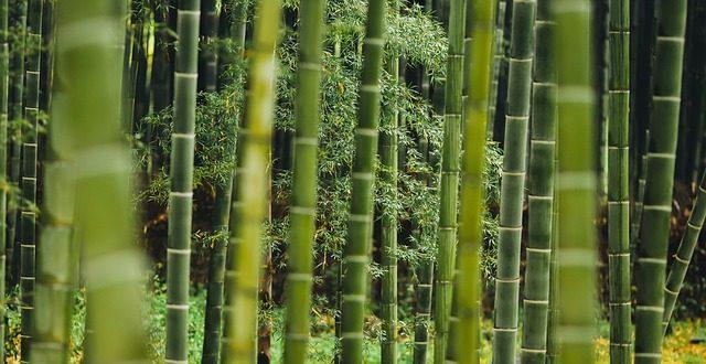 Bambusschilf Im Garten Vom Pflanzen Bis Zum Pflegen Gartenmagazinede