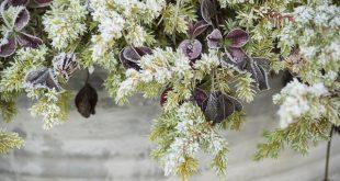 Bild frostige Pflanze