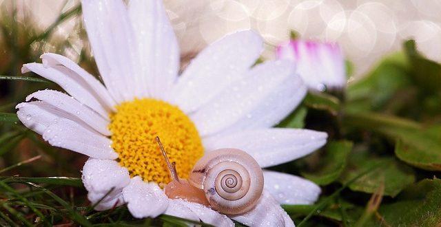 Bild Schnecke auf einer Blume