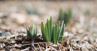 Bild Pflanzen anbauen
