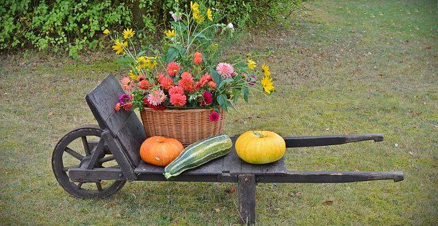 Bild Pflanzen im Herbst