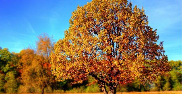 Bild Baum im Herbst