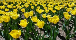 Bild Blumenbeet