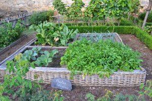 Bild Gemüsegarten