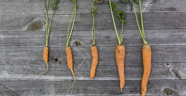 Bild Karotten