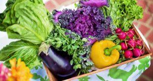 Bild Bio-Gemüse