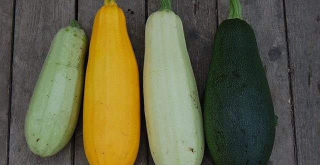 Bild Zucchini